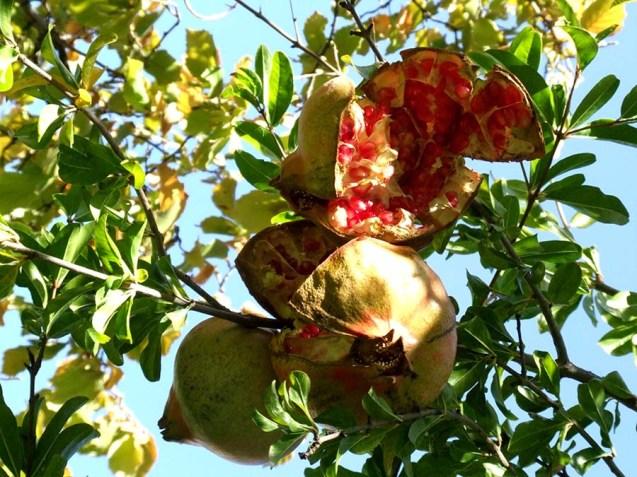 Frutas Pinos Genil
