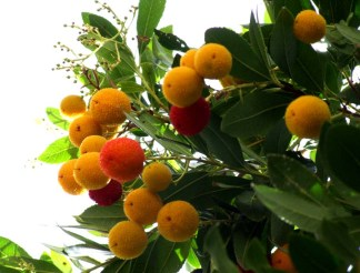 Fruits_autumn_09 018